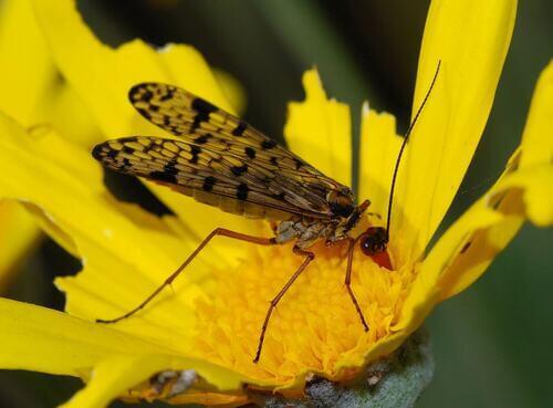 Insetti impollinatori e piante: una simbiosi ancestrale.