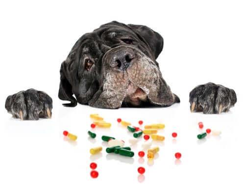 Medicinali per le cardiopatie del cane.
