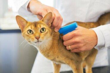 Il microchip per i gatti è obbligatorio?