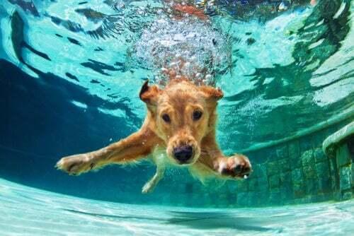 Nuoto per cani: cosa bisogna sapere