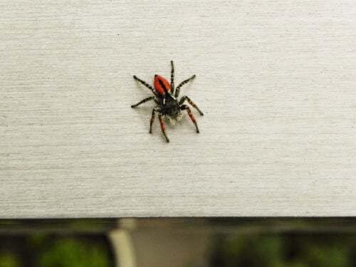 Paura dei ragni o aracnofobia: come superarla?