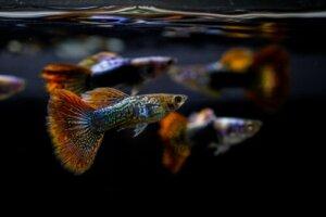 Il pH nell'acquario: che cos'è e qual è quello ideale