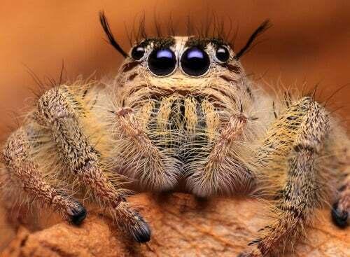 Primo piano di un ragno.