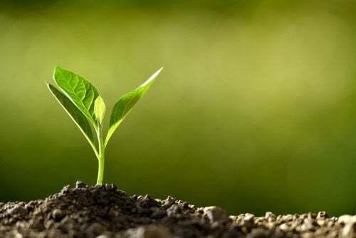 Germogli di piante che emergono dal terreno.