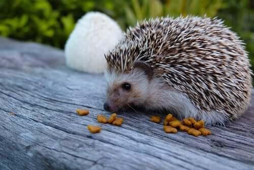 La sindrome del Riccio Barcollante (Wobbly hedgehog syndrome)