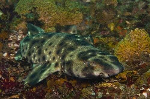 Il segreto degli squali che brillano nell'oscurità