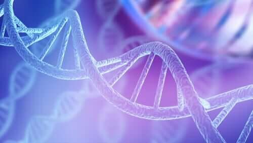 Struttura del DNA.