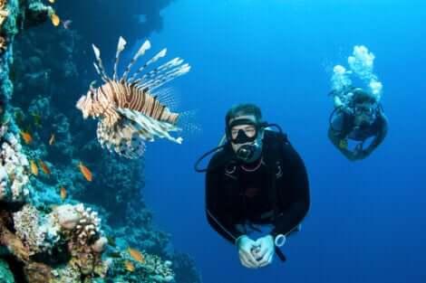 Due sub nuotano nei fondali con il pesce scorpione.
