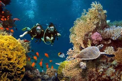 Sub che si immergono nella barriera corallina.