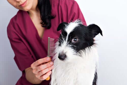 Cura del pelo nei cani: alcuni consigli