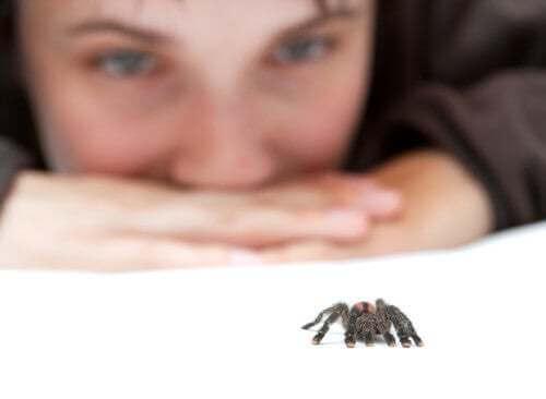 Combattere la paura dei ragni è difficile ma possibile. Ragazza guarda una piccola tarantola.