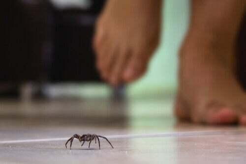 Il veleno di alcuni ragni è letale per l'uomo.