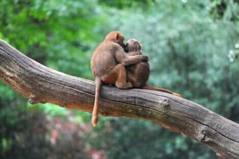 L'empatia dimostrata dalle scimmie ci dimostra che anche loro sono dotate di sentimenti.