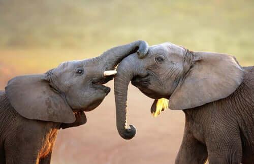 Gli animali hanno sentimenti? La risposta è complessa