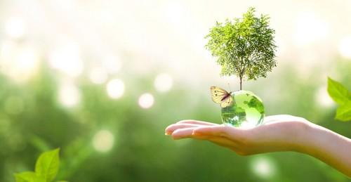 Successione ecologica: di cosa si tratta?