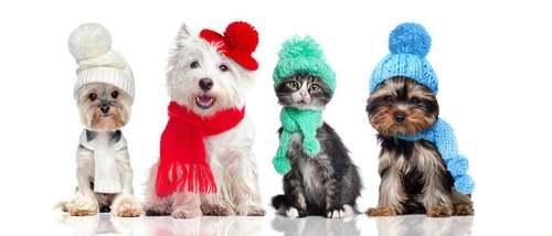 Animali domestici con cappello e sciarpa.
