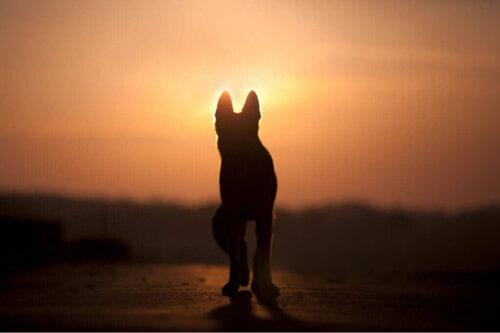 I cani sono consapevoli della morte?