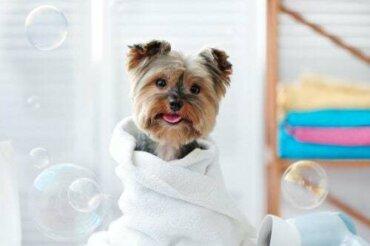 Come usare le salviette umidificate per pulire gli animali domestici