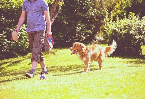Cane cammina con il padrone.