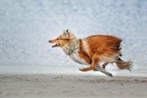 Le razze di cani che tendono a scappare