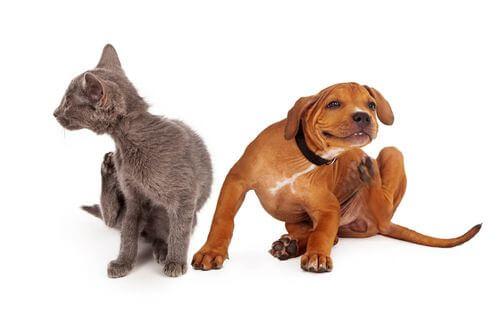Cane e gatto che si grattano.