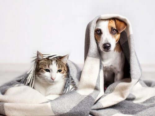 Cane e gatto malati.