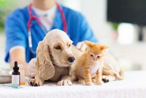 Cane e gatto dal veterinario.