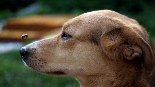 Punture di insetto nel cane e come trattarle