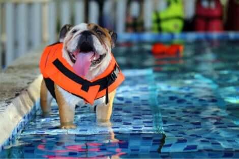 Una piscina per cani è il modo migliore per aiutare i nostri animali a difendersi dal caldo.