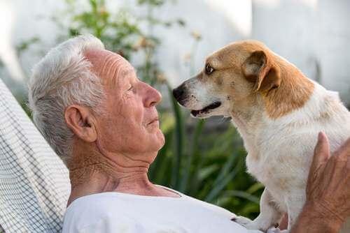 Cane insieme al padrone anziano.