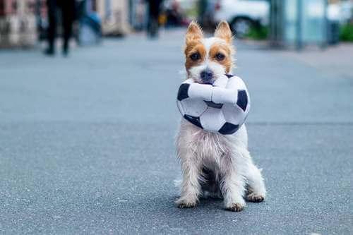 Cane con un pallone in bocca.