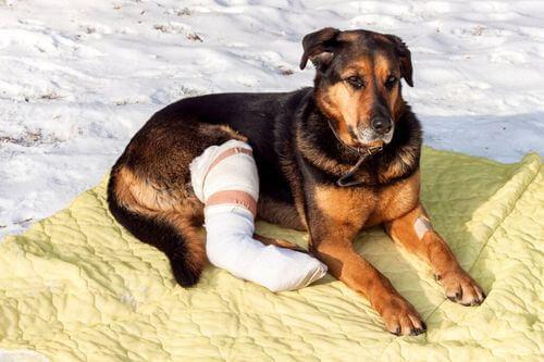 Cura di un animale domestico dopo un intervento chirurgico