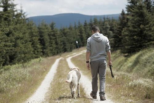 Perché i cani seguono i padroni? Ecco la spiegazione