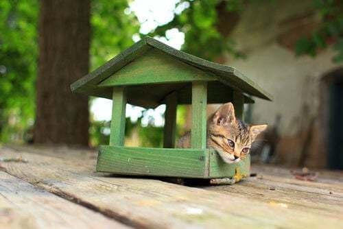 Costruire una casa per gatti in 4 mosse