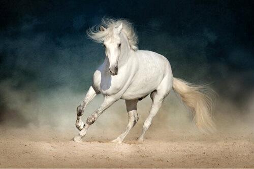 Coliche nei cavalli: come prevenirle e individuarle tempestivamente