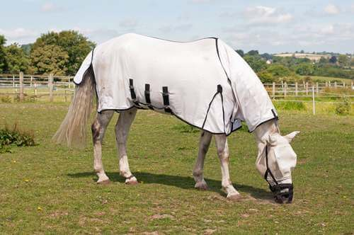 Cavallo coperto.