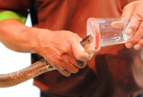 Il veleno di serpente viene impiegato nella preparazione di numerosi farmaci.