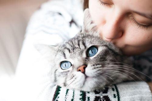 Gatto che riceve attenzioni e affetto.