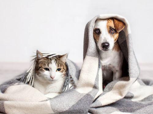 Gatto e cane con coperta.