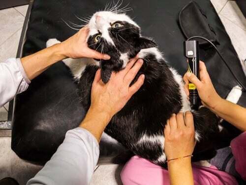 La terapia laser per gli animali domestici