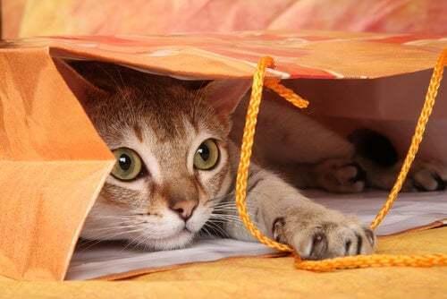 Gatto nascosto dentro un sacchetto.