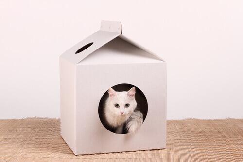 Gatto in una scatola.