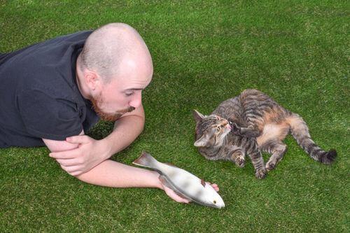 L'interazione sociale dei gatti: come comprenderla?