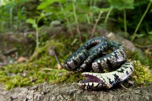 Serpente sottosopra in un bosco.