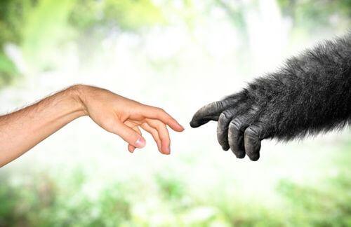 Il Lamarckismo: un'altra teoria dell'evoluzione