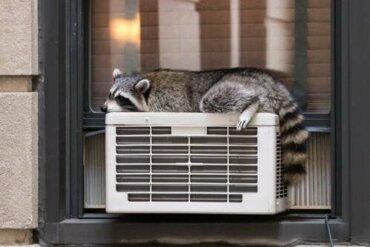La termoregolazione negli animali, un processo affascinante