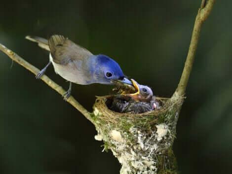 Nel regno animale, le cure parentali si manifestano sotto molte forme differenti.