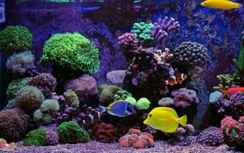 Il substrato migliore per l'acquario: ghiaia o sabbia?