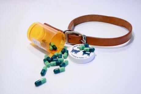 La terapia antibiotica è il trattamento fondamentale per combattere la setticemia nei cani.