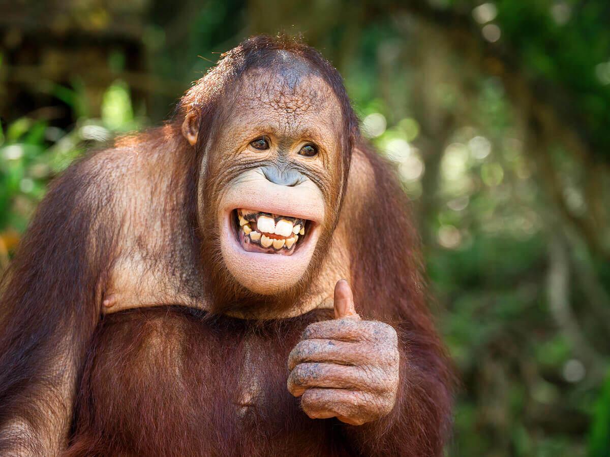 Primate che sorride.